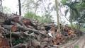 Truy trách nhiệm vụ chặt hạ cây xanh