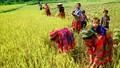Thủ tướng chỉ đạo: Phải giảm tỷ lệ hộ nghèo