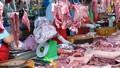 Sẽ xử lý đối tượng tung tin đồn dịch tả lợn Châu Phi xuất hiện tại Cà Mau