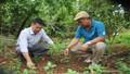 Người đầu tiên làm giàu từ mô hình trồng xen cây đàn hương ở Tây Nguyên