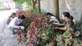 Phụ nữ Cam Đường tích cực bảo vệ môi trường, trồng hoa thay cỏ dại
