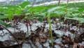 Mưa đá lần đầu tiên xuất hiện tại Si Ma Cai