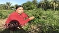 Thuốc quý quanh ta - (Bài 1): Xu hướng lựa chọn dược liệu xanh, nguồn gốc sạch từ thiên nhiên