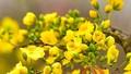 Lộng lẫy sắc vàng Xuân phương Nam