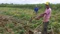 Thừa Thiên Huế thiệt hại gần 13 tỷ đồng vì mưa lũ