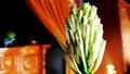 Kỳ lạ cây trường sinh trổ hoa hiếm vào dịp Tết