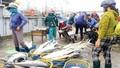 Ngư dân Quảng Trị trúng đậm mẻ cá bè quỵt gần 100 tấn
