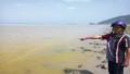 Huế:  Nguyên nhân xuất hiện nước biển màu Vàng là do Tảo