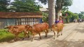Hơn 200 người diễn tập ứng phó với bão lũ tại Quảng Trị