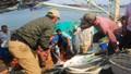 Ngư dân Quảng Trị trúng đậm cá bè vàng đầu năm, thu tiền tỷ