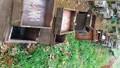 Điều tra vụ ong nuôi trong hàng trăm thùng chết bất thường, nghi do đầu độc