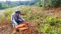 Bị phạt hơn 300 triệu đồng vì phá 1.355m2 rừng làm dự án sinh thái