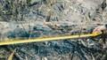 Vụ cháy rừng ở Bắc Giang: Thủ phạm vẫn 'nhởn nhơ' ngoài vòng pháp luật
