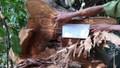 Doanh nghiệp ở Đắk Nông để mất trắng hàng trăm ha rừng