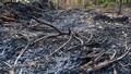 Xót xa hàng trăm cây ăn quả ở Hưng Yên nghi bị kẻ gian đốt trụi