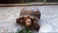 Thả cá thể rùa hộp quý hiếm về rừng tự nhiên
