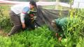 Bộ đội Biên phòng Hà Tĩnh phát hiện một hộ dân trồng nhiều cây thuốc phiện trong vườn
