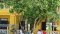 Trường sa: Những loài cây vươn mình trong nắng gió đảo xa