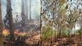 Bình Phước: Nghi án đốt rừng vì tranh chấp kéo dài không được giải quyết dứt điểm