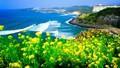 Hai điểm đến thú vị tại Hàn Quốc dịp hè
