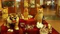"""Kuching - Sức hấp dẫn của thành phố """"Mèo"""""""