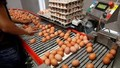 Hàn Quốc: Ra lệnh phát hành sách trắng về vụ trứng 'bẩn'