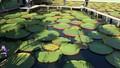 Chùa Lá Sen - điểm đến hot nhất miền Tây mùa nước nổi