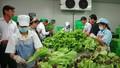 Hướng tới thúc đẩy đầu tư tư nhân để xây dựng chuỗi giá trị thực phẩm