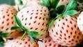 5 loại trái cây có hình thù kỳ lạ, giá trên trời chỉ có ở Nhật