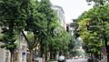 Phát triển, quản lý cây xanh trong đô thị: Cây xanh sống nhờ đâu?