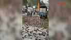 Xe tải lật khiến 3 tấn cá rô nằm kín mặt đường, hành động của người dân sau đó được khen ngợi hết lời