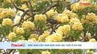 Độc đáo cây hoa Bún hơn 300 tuổi ở Hà Nội
