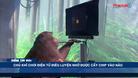 Chú khỉ chơi điện tử điêu luyện nhờ được cấy chip vào não - Điểm tin 60s ngày 11/04