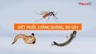 Cách diệt muỗi đơn giản ai cũng làm được theo khuyến cáo của WHO