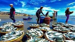 Thủy sản khai thác bất hợp pháp sẽ bị từ chối thông quan