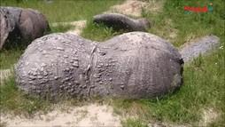 Kỳ lạ hòn đá có thể lớn lên sau mỗi trận mưa