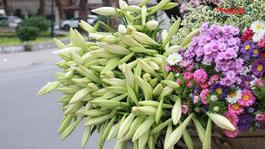 Tháng 4 – hoa loa kèn gọi hè về khắp phố