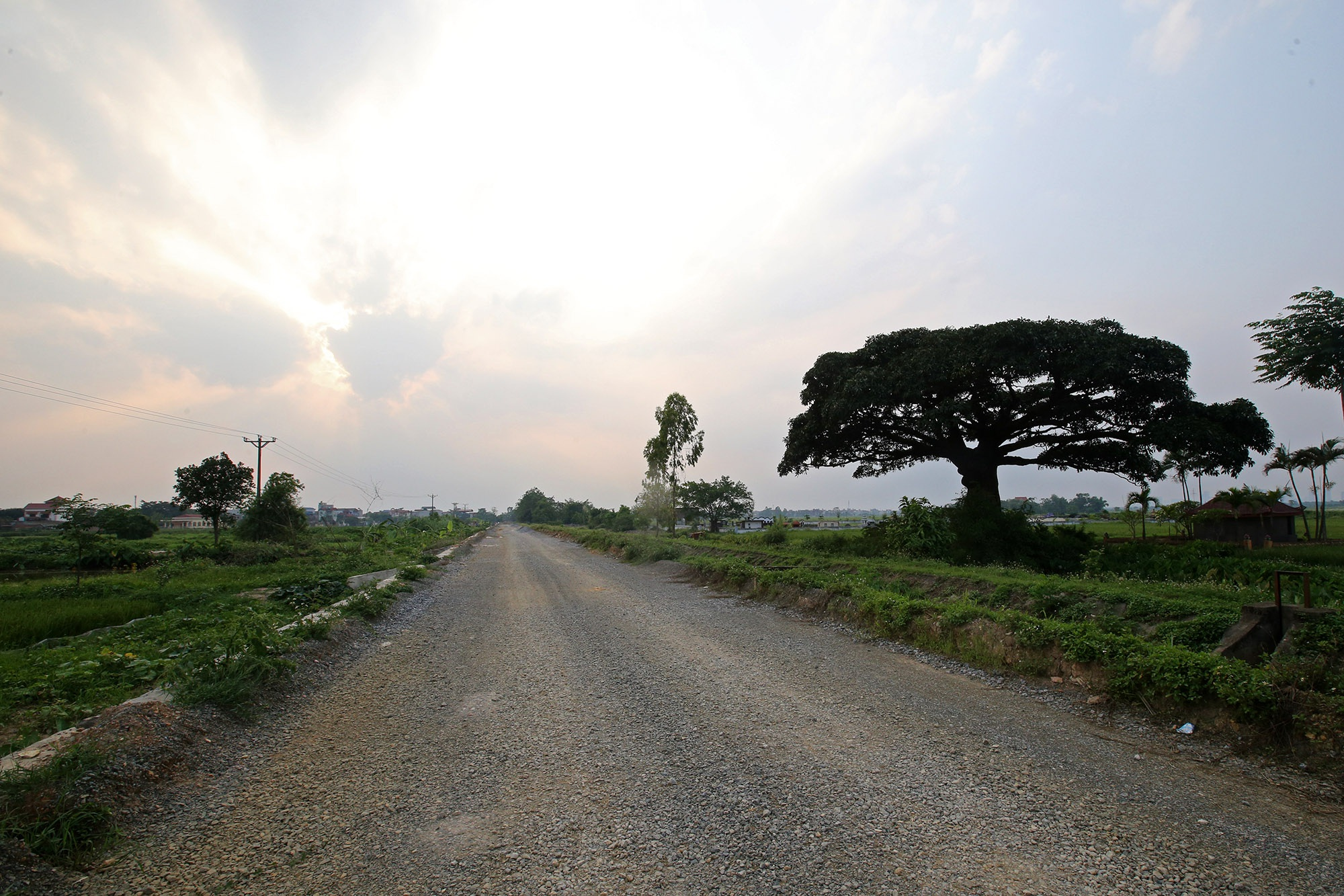 Hà Nội: Cây trôi cô đơn nghìn năm tuổi, báu vật của làng Bình Đà - 15