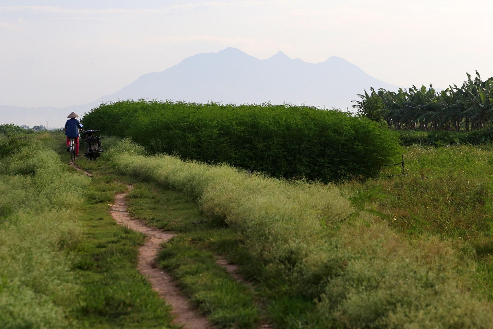 Phong cảnh bình yên nhìn từ những triền đê ở Hà Nội - 12