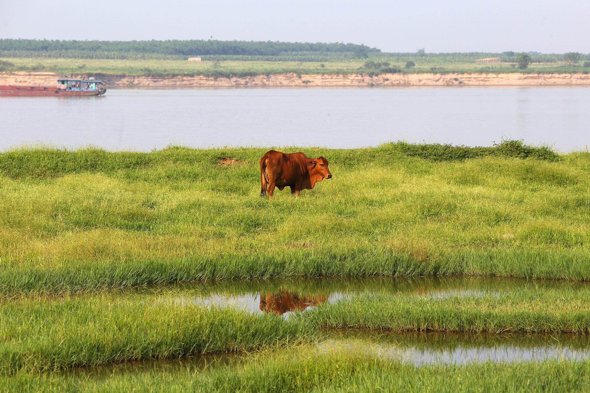 Phong cảnh bình yên nhìn từ những triền đê ở Hà Nội - 13