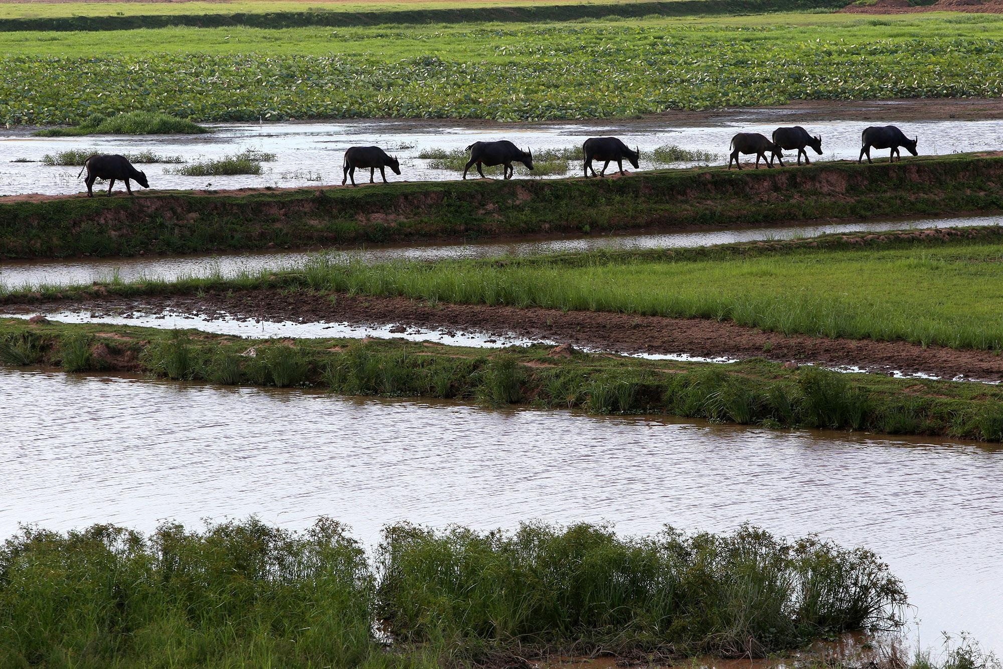 Phong cảnh bình yên nhìn từ những triền đê ở Hà Nội - 4