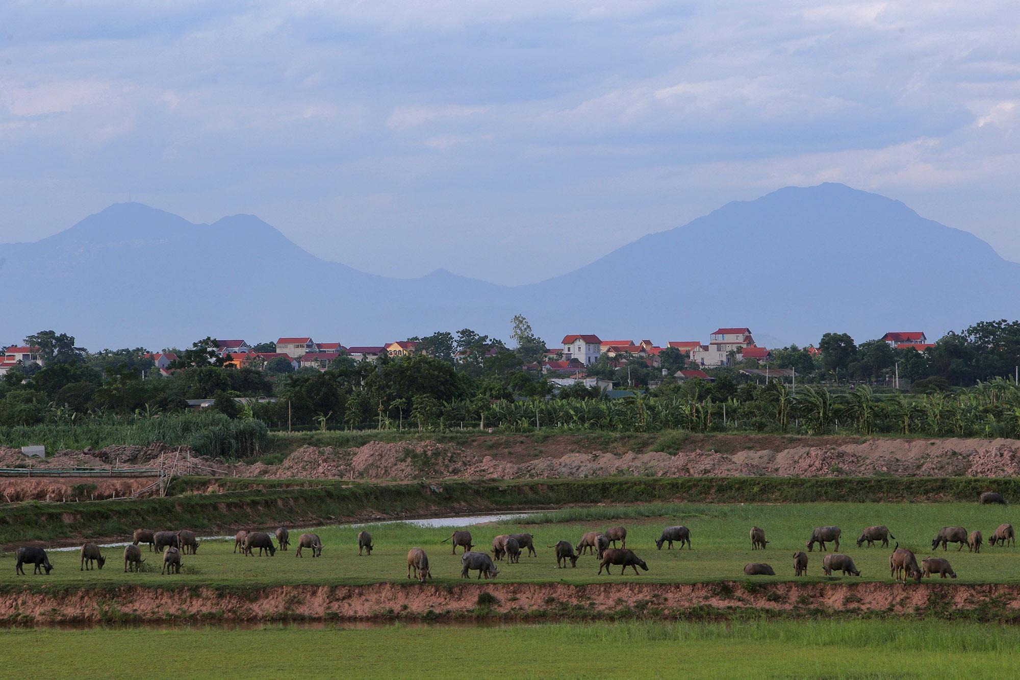 Phong cảnh bình yên nhìn từ những triền đê ở Hà Nội - 9