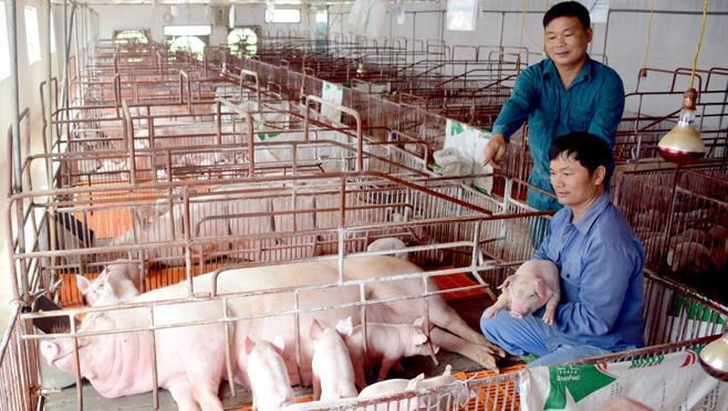 Giảm 50% mức thu phí trong chăn nuôi kể từ ngày 17/5