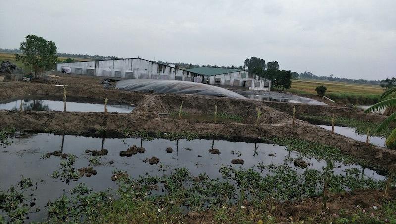 Hải Phòng: Khắc phục hậu quả ô nhiễm môi trường từ các trang trại chăn nuôi