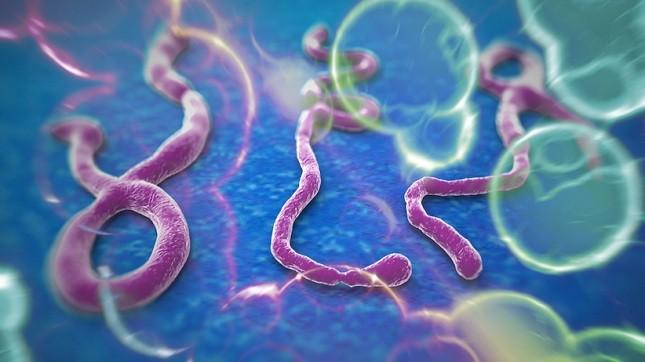 Việt Nam chưa ghi nhận trường hợp nhiễm dịch Ebola