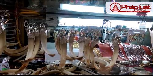 Điện Biên: Công khai chào bán nanh động vật quý hiếm