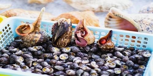 Cục ATVSTP khuyến cáo người dân tuyệt đối không ăn ốc lạ, quả lạ