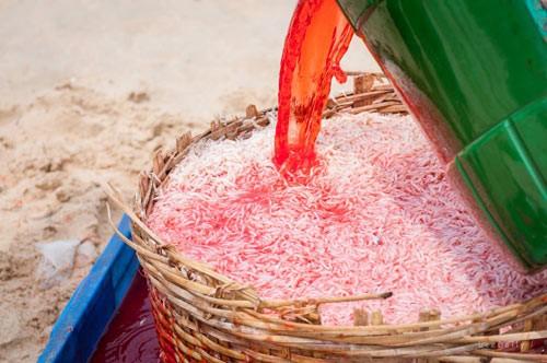 Phú Yên: Người dân sử dụng hóa chất, gây ung thư để nhuộm ruốc biển