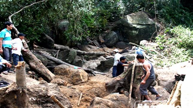 Người dân đào bới tìm trầm kỳ tại khu rừng xã Sơn Trung, huyện Khánh Sơn