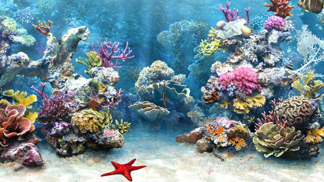 """""""Phù phép"""" nhập hàng tấn san hô, bức hại môi trường biển"""